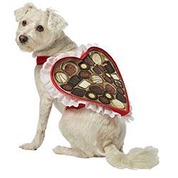 candy hound