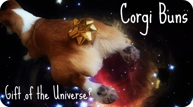 corgi butts drive us nuts