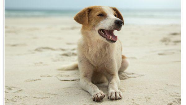 The Best Dog Beach in New Smyrna Beach, FL