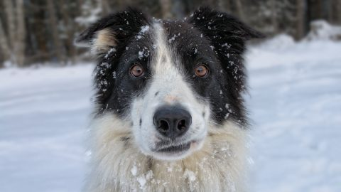 Dog sitting tips for severe weather