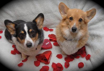 Pet sitters dog valentine