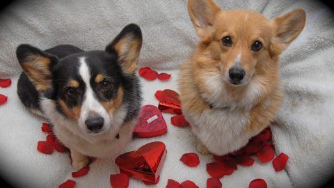 Pet sitters dog valentine