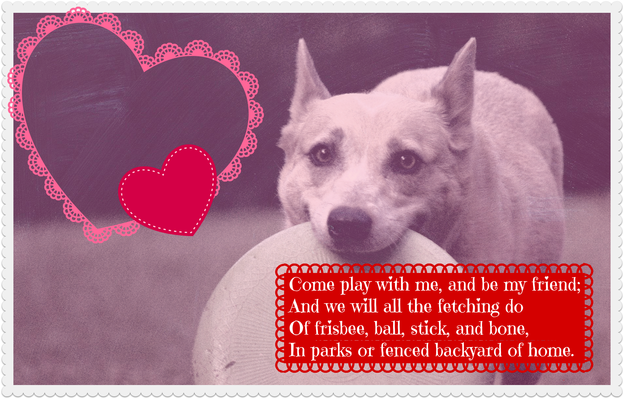 dog valentine fetch2