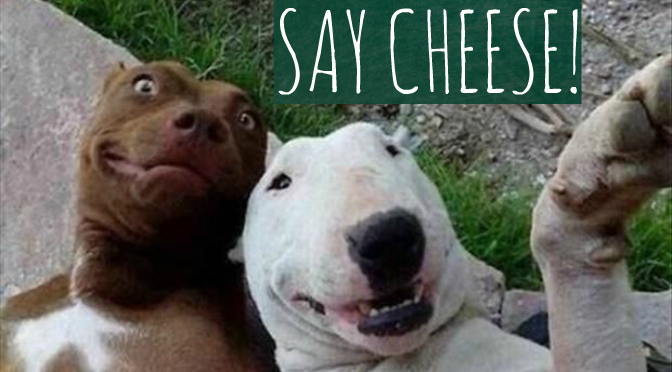 10 Dogs Cheesin' for the Camera | The Dog People by Rover com
