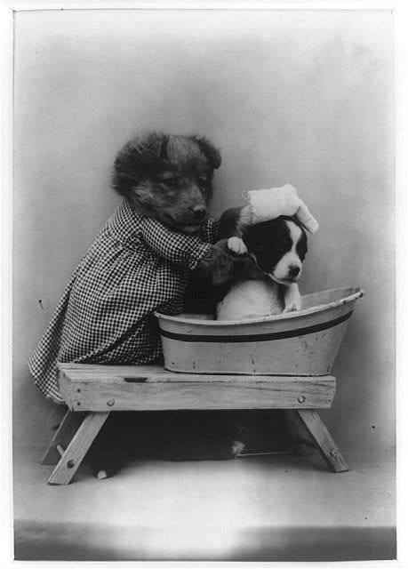 funny vintage dog photography bath day