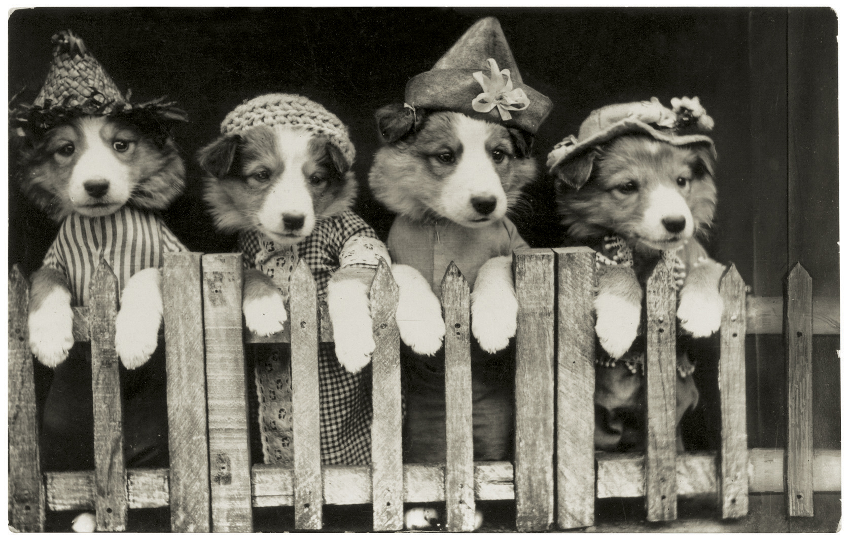 funny vintage dog photography costume