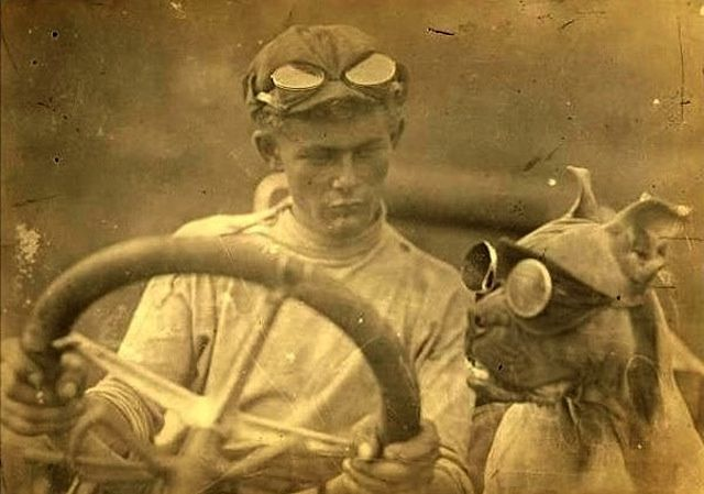 funny vintage dog photography driving