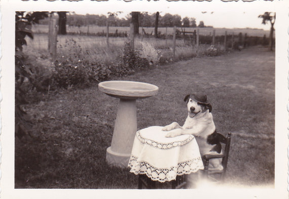 funny vintage dog photography picnic