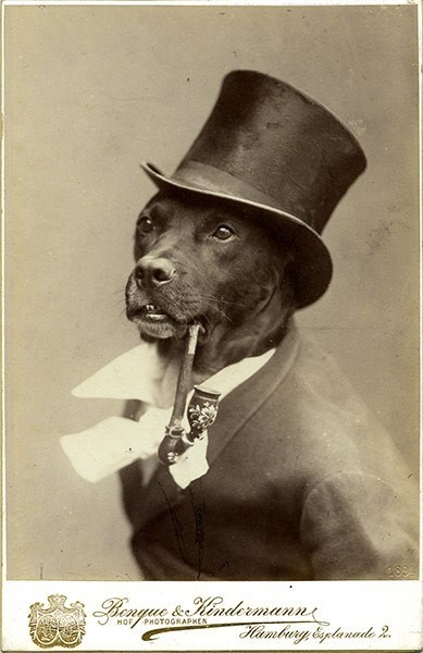 funny vintage dog photography pipe and top hat