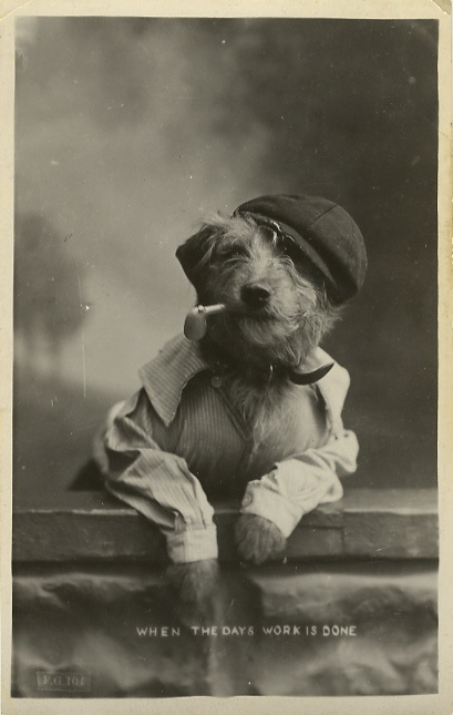 funny vintage dog photography pipe smoker