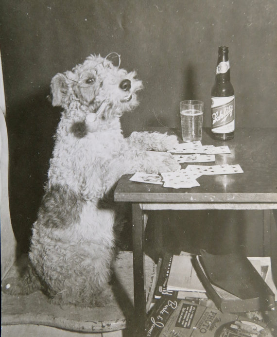funny vintage dog photography poker