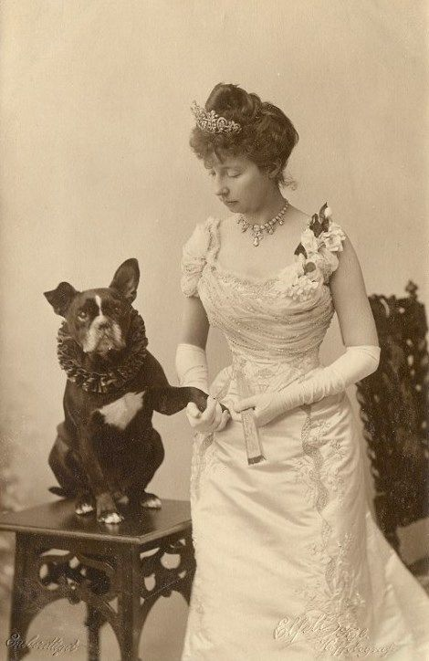 funny vintage dog photography royalty