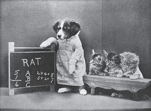 funny vintage dog photography school days