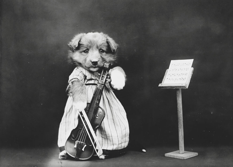 funny vintage dog photography the prodigy