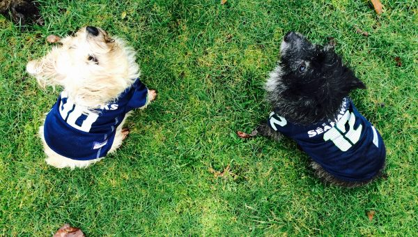 Who Wore It Better? 8 Dogs Sporting Their Football Finest