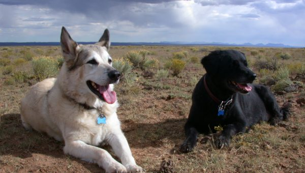 Dog-Friendly Fun for Fido in New Mexico