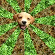 San Francisco marijuana dog treats