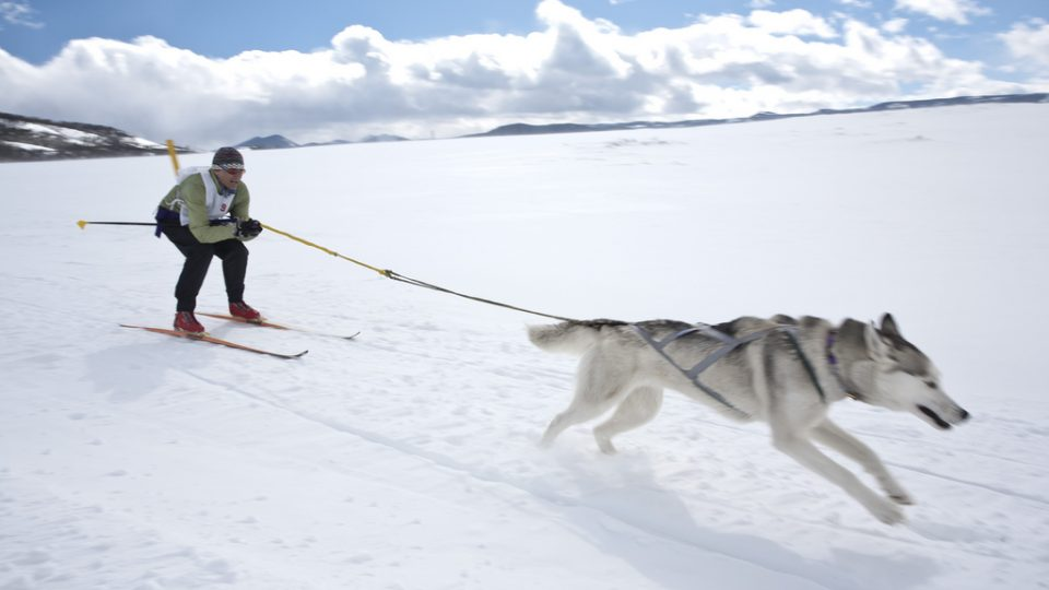 skijoring is the best dog sport you never heard of  here u0026 39 s