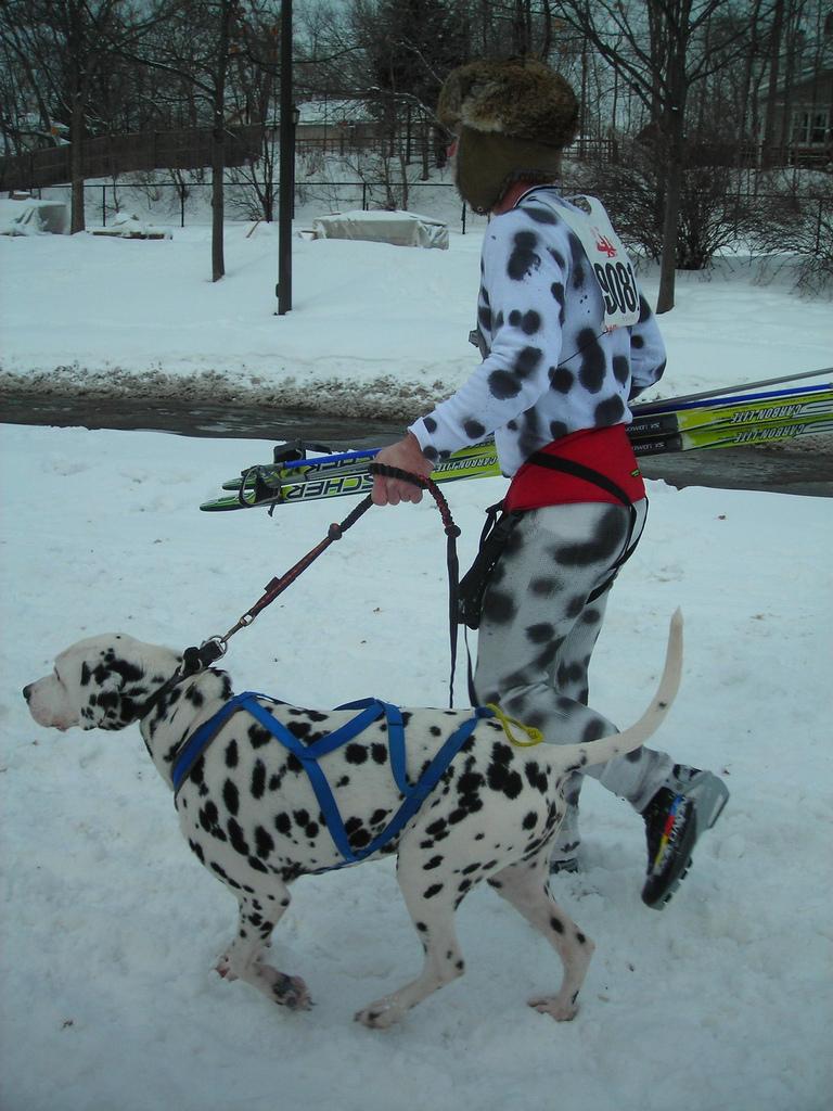 Roller skates for dogs - Flickr Velomobiling