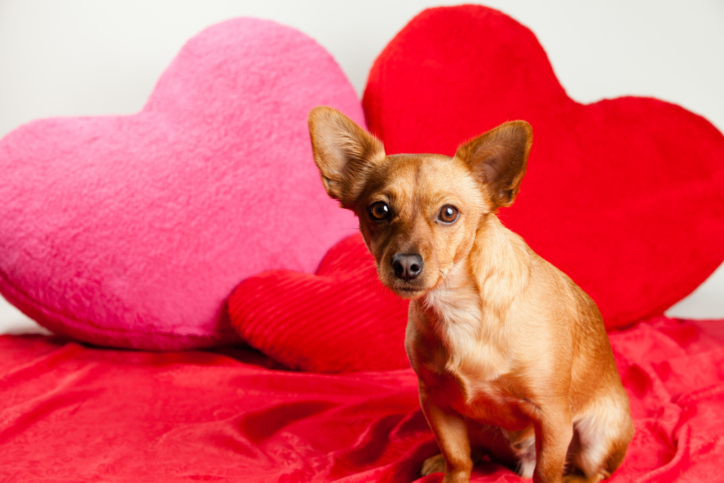 The 5 Best Valentine S Day Recipes For Your Dog Rover Com
