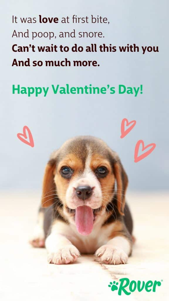 """Puppy valentine reading, """"It was love at first bite, and poop and snore, can't wait to do all this with you are so much more. Happy Valentine's Day!"""""""