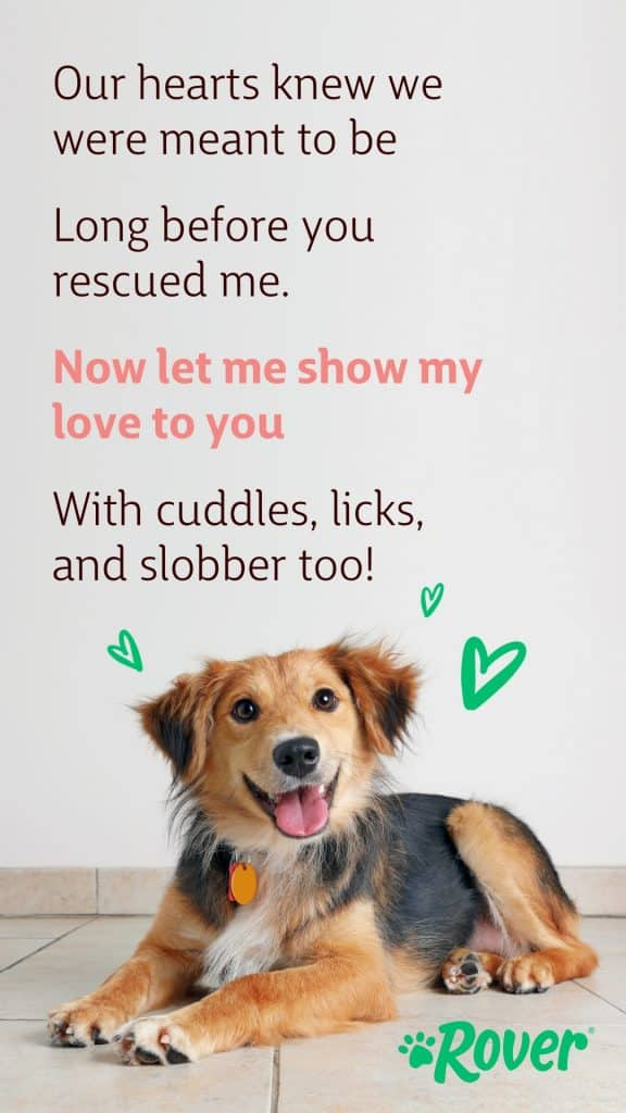 """Rescue dog valentine reading, """"Our hearts knew we were meant to be, long before you rescued me. Now let me show my love to you, with cuddles, licks and slobber too!"""""""