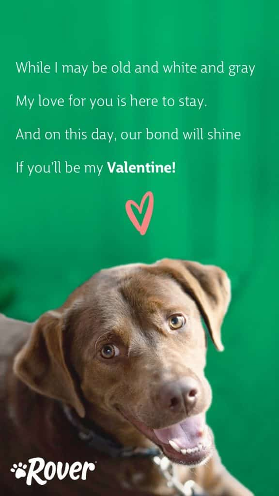 """senior dog valentine card reading, """"While I may be old and white and gray, my love for you is here to stay. And on this day, our bond will shine, if you'll be my Valentine!"""""""