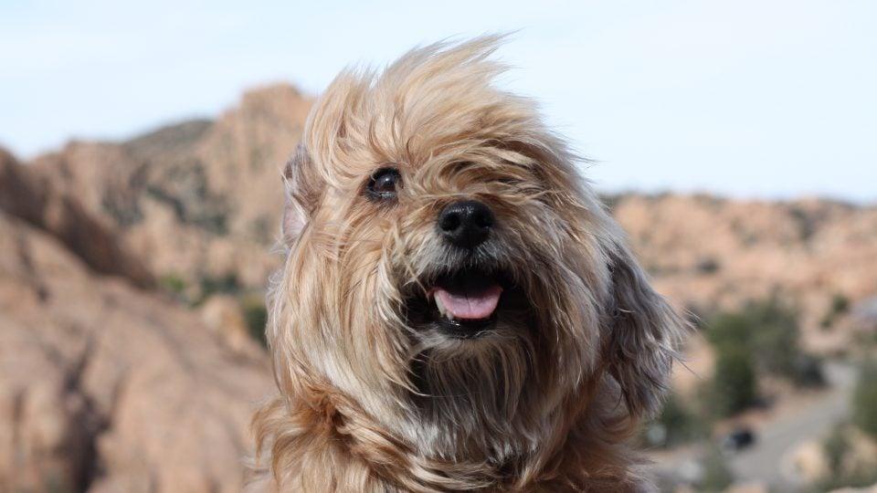 dog friendly Arizona