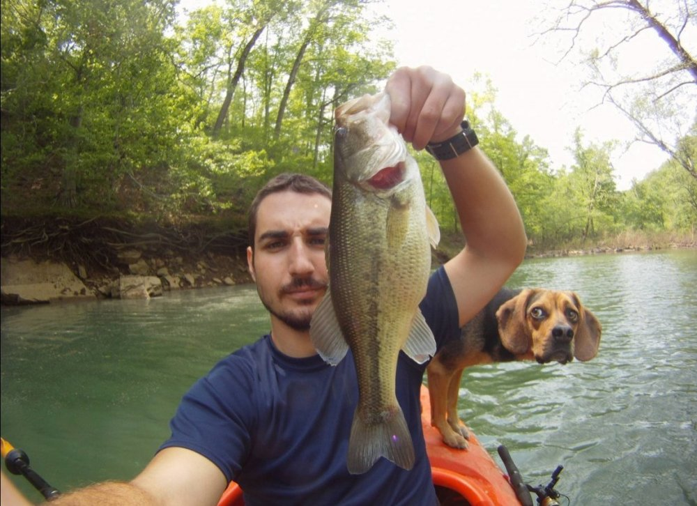 dog fish photobomb