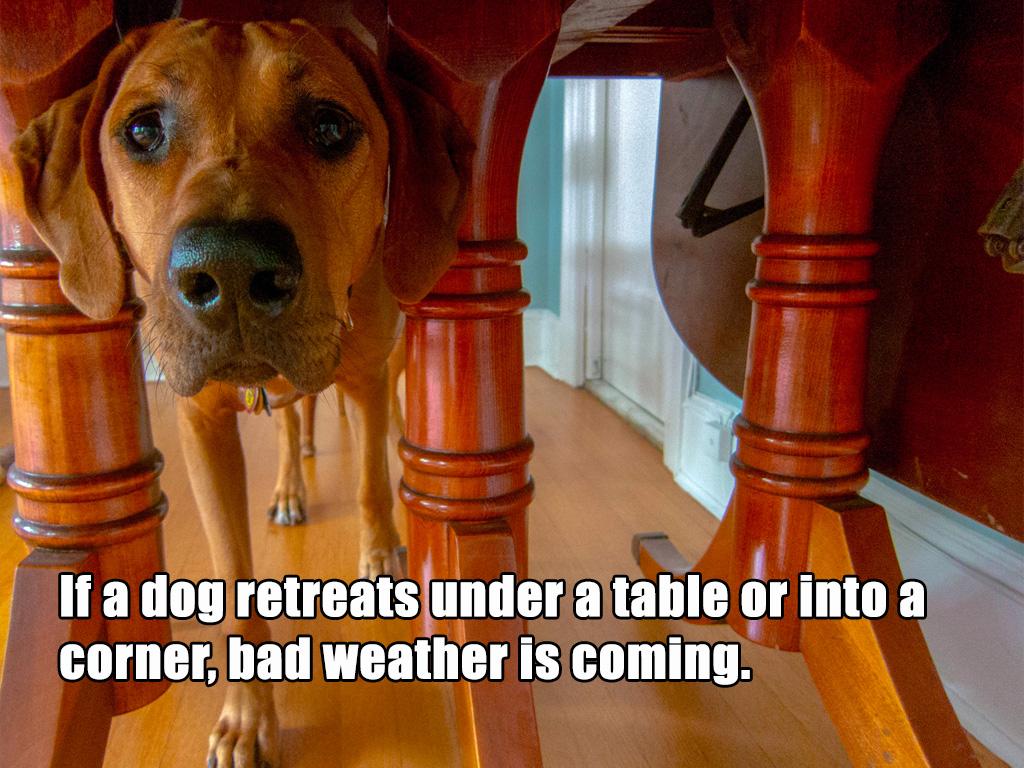 dog hiding superstition