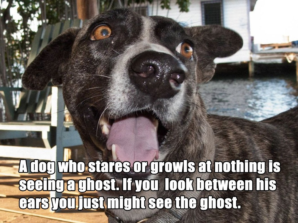 dog staring growling ghosts superstition2