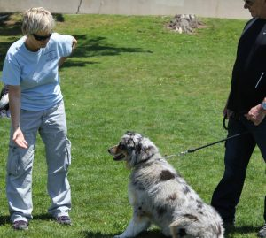 Dog behaviorist Beverly Ulbrich says training is the most important step you can take to make sure your dog is comfortable when you have to leave him. Photo courtesy of the Pooch Coach.