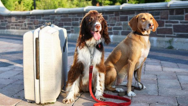 The Top 4 Options for Your Dog When You Travel