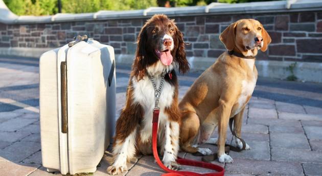 Two dogs with a suitcase — travel tips for dog owners