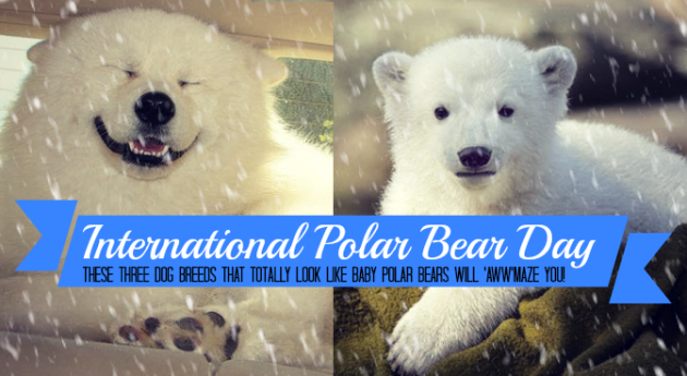 international polar bear day puppies