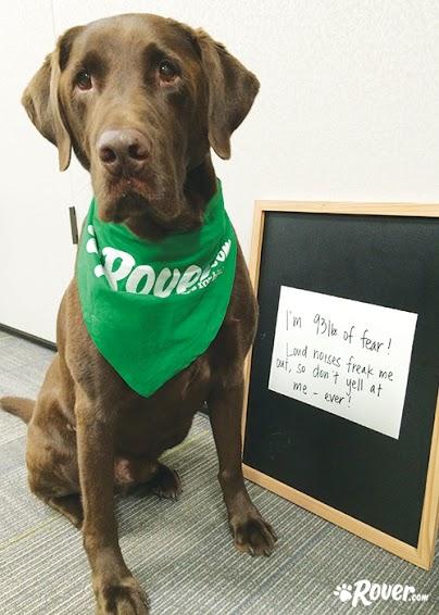 Rover office dogs - Beacon