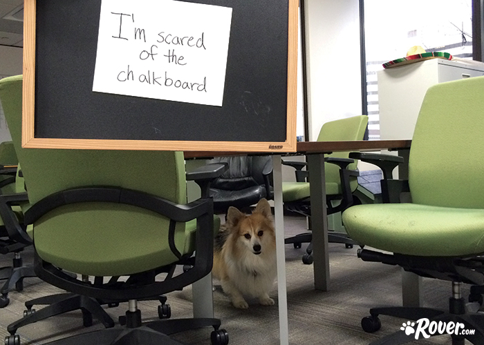 Rover office dogs - Bowser