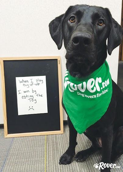 Rover office dogs - meet Della