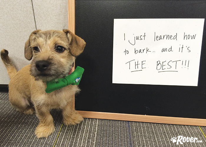 Rover office dogs - Herbie
