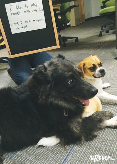 Rover office dogs - Mowgli