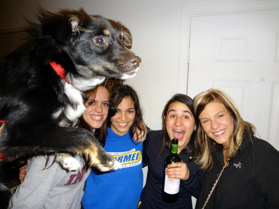 party puppy popup photobomb