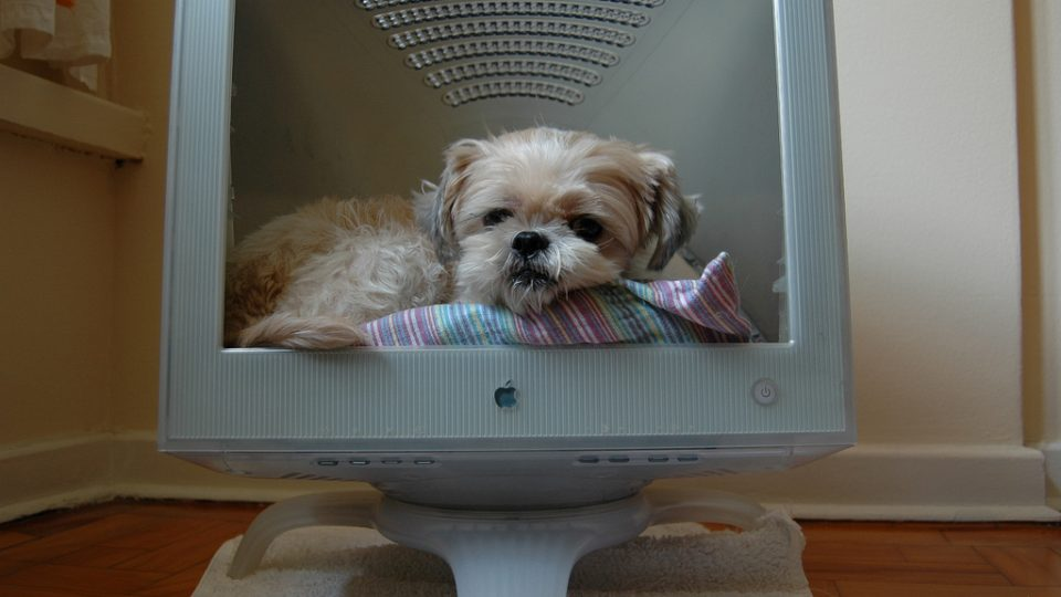 Dog sits in a computer - Rover.com seeks software developers