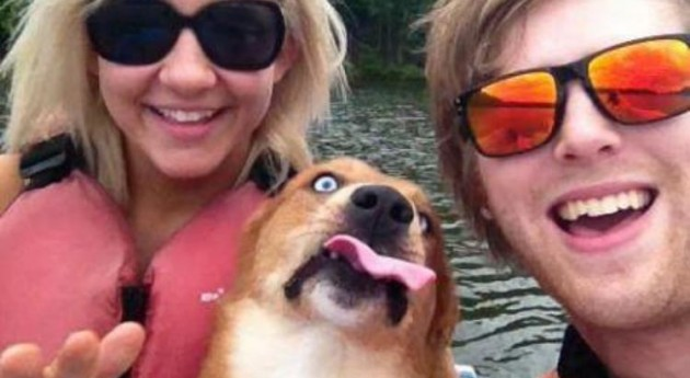 14 Epic Canine Photobombs