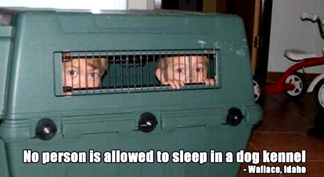 strange dog laws
