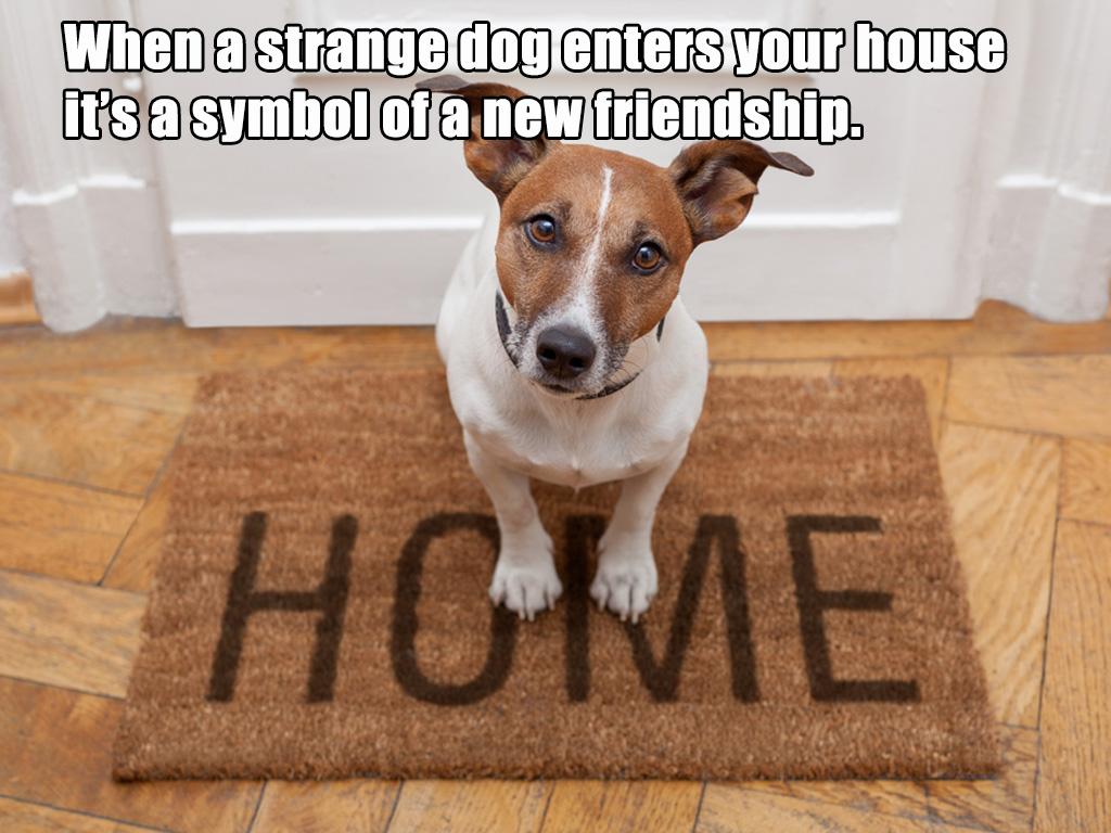 strange dog visit superstition