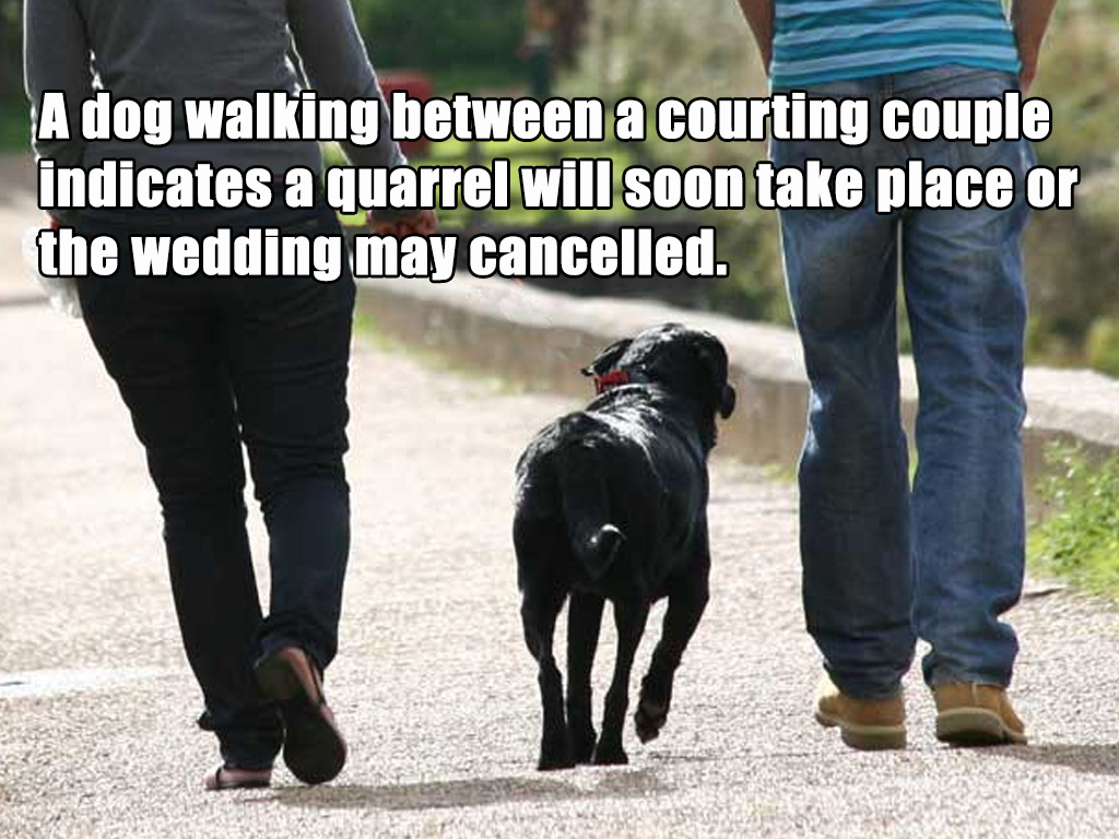 superstition dog couples