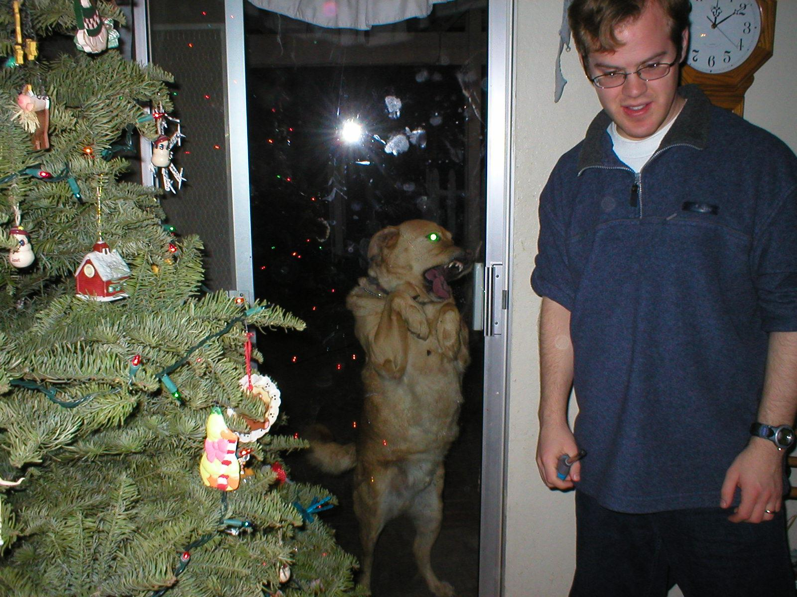 the ghost of christmas past dog photobomb