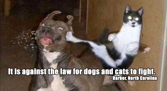 weird dog laws USA