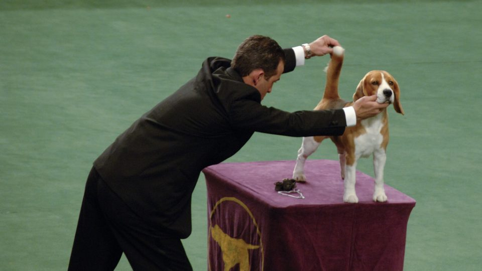 9 Surprising Facts About the Westminster Dog Show | Rover Blog