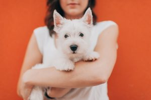 Woman holds dog - find a loving dog sitter at Rover.com